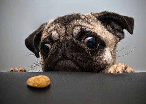 Perro hambriento